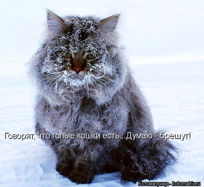 Котоматрица: Говорят, что голые кошки есть...Думаю - брешут!
