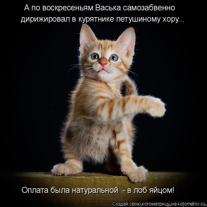 Котоматрица: А по воскресеньям Васька самозабвенно дирижировал в курятнике петушиному хору... Оплата была натуральной  - в лоб яйцом!