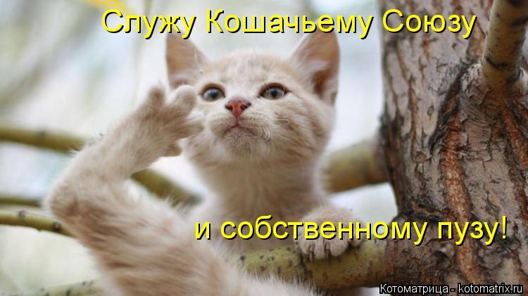 Котоматрица: Служу Кошачьему Союзу и собственному пузу!
