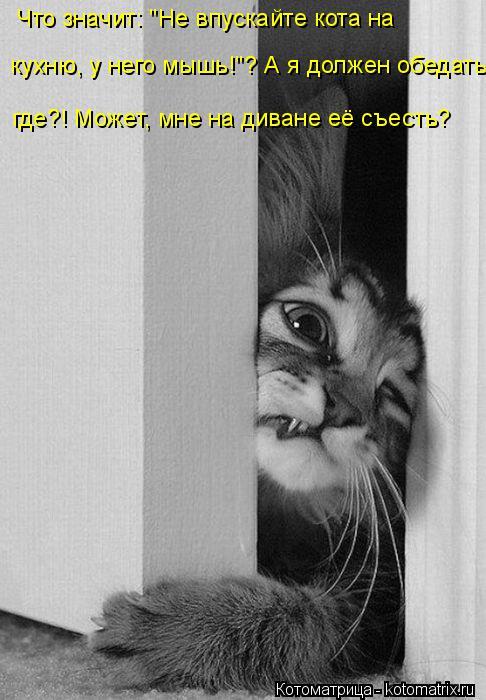 """Котоматрица: Что значит: """"Не впускайте кота на  кухню, у него мышь!""""? А я должен обедать где?! Может, мне на диване её съесть?"""