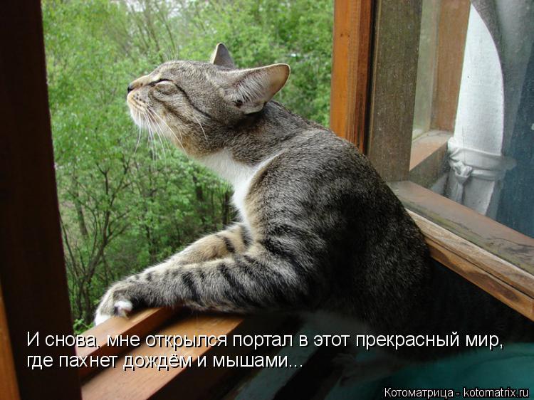 Котоматрица: И снова, мне открылся портал в этот прекрасный мир, где пахнет дождём и мышами...