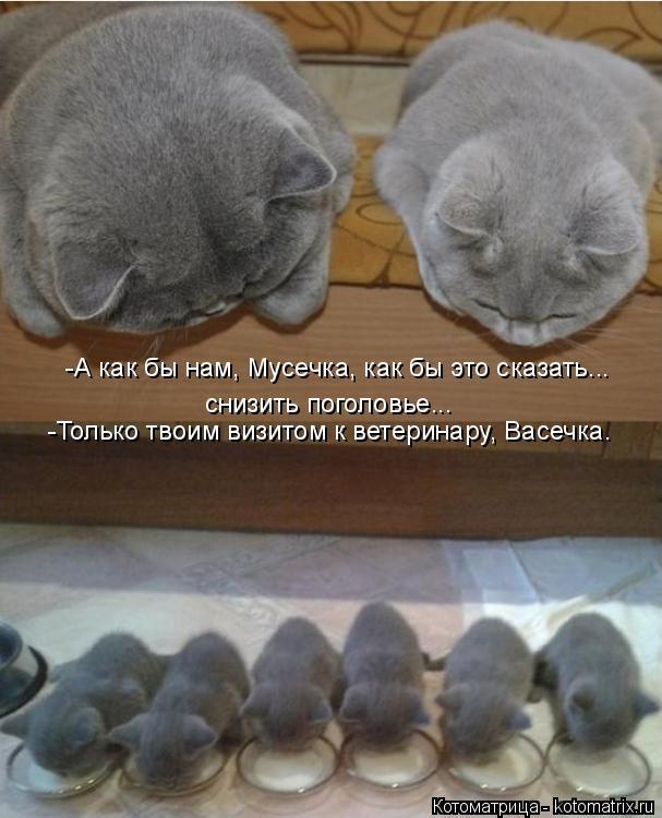 Котоматрица: снизить поголовье... -А как бы нам, Мусечка, как бы это сказать...  -Только твоим визитом к ветеринару, Васечка.