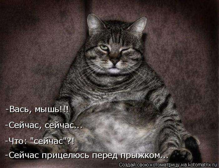 """Котоматрица: -Сейчас прицелюсь перед прыжком... -Что: """"сейчас""""?! -Сейчас, сейчас... -Вась, мышь!!!"""