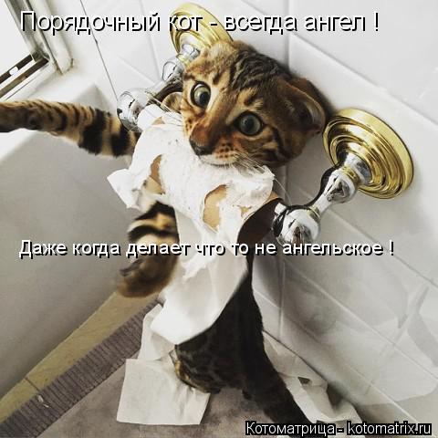 Котоматрица: Порядочный кот - всегда ангел ! Даже когда делает что то не ангельское !