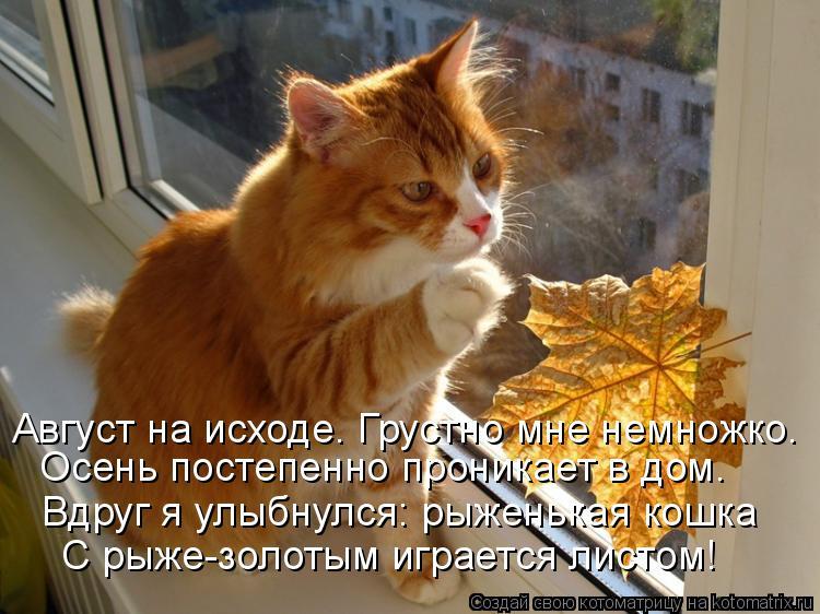 Котоматрица: С рыже-золотым играется листом! Вдруг я улыбнулся: рыженькая кошка Осень постепенно проникает в дом. Август на исходе. Грустно мне немножко.