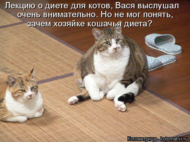 Котоматрица: Лекцию о диете для котов, Вася выслушал очень внимательно. Но не мог понять, зачем хозяйке кошачья диета?