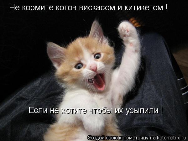 Котоматрица: Не кормите котов вискасом и китикетом ! Если не хотите чтобы их усыпили !