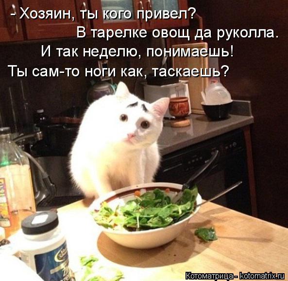 Котоматрица: - Хозяин, ты кого привел? В тарелке овощ да руколла. И так неделю, понимаешь! Ты сам-то ноги как, таскаешь?