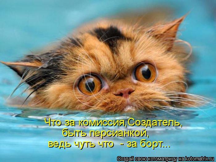 Котоматрица: Что за комиссия,Создатель, быть персианкой, ведь чуть что  - за борт...