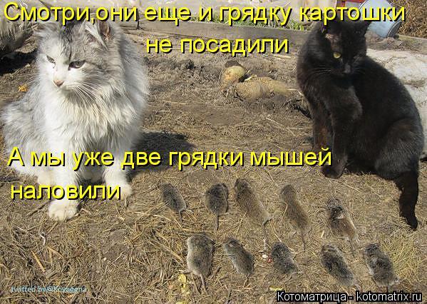 Котоматрица: Смотри,они еще и грядку картошки  не посадили А мы уже две грядки мышей наловили