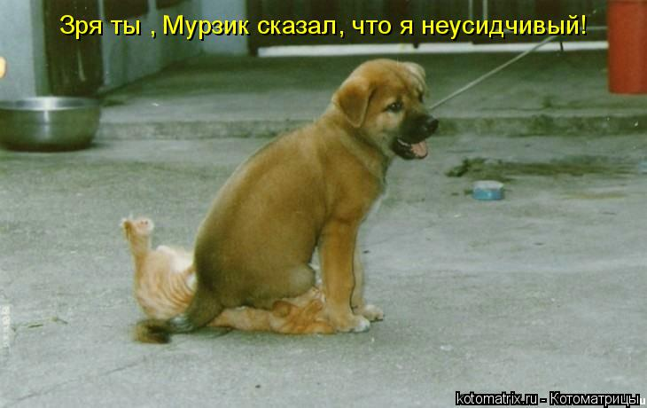 Котоматрица: Зря ты , Мурзик сказал, что я неусидчивый!