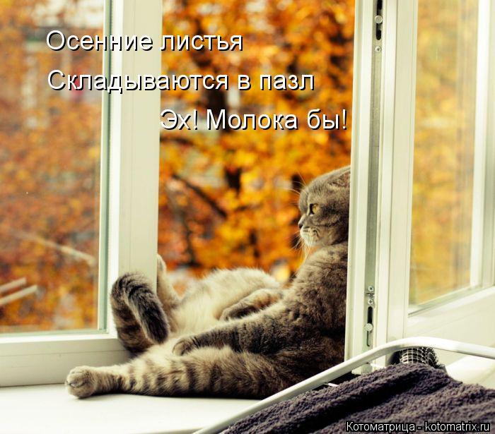 Котоматрица: Осенние листья  Складываются в пазл Эх! Молока бы!