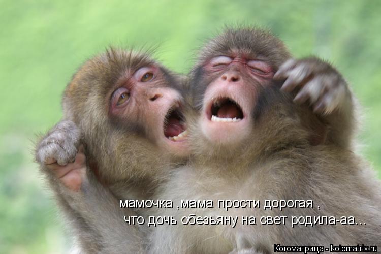Котоматрица: мамочка ,мама прости дорогая , что дочь обезьяну на свет родила-аа...