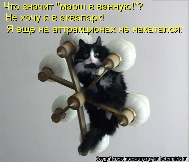"Котоматрица: Что значит ""марш в ванную!""? Не хочу я в аквапарк! Я еще на аттракционах не накатался!"