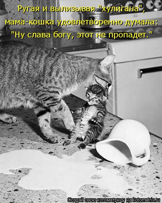"""Котоматрица: Ругая и вылизывая """"хулигана"""", мама-кошка удовлетворенно думала: """"Ну слава богу, этот не пропадет."""""""