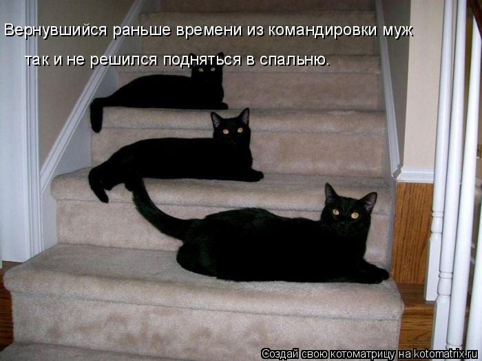 Котоматрица: Вернувшийся раньше времени из командировки муж так и не решился подняться в спальню.