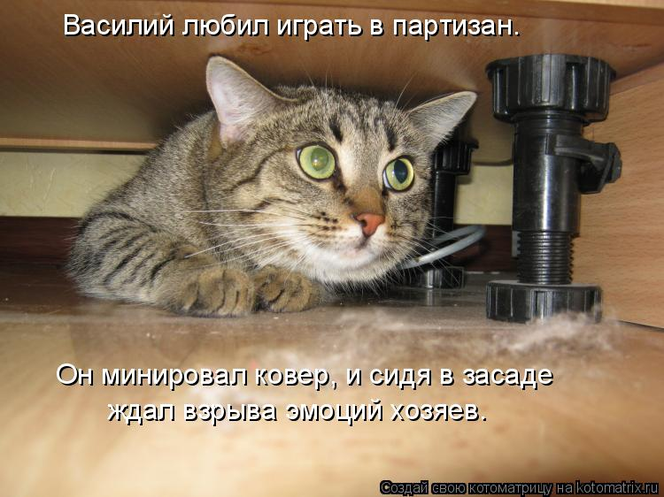 Котоматрица: Василий любил играть в партизан. Он минировал ковер, и сидя в засаде ждал взрыва эмоций хозяев.