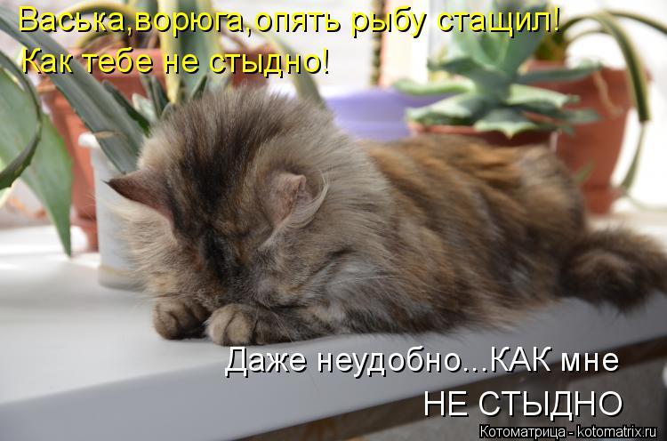 Котоматрица: Васька,ворюга,опять рыбу стащил! Как тебе не стыдно! Даже неудобно...КАК мне НЕ СТЫДНО