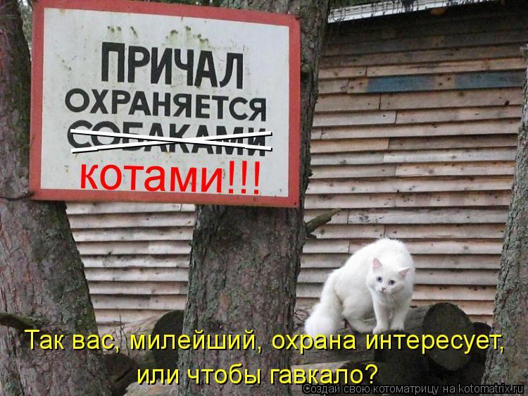 Котоматрица: ________ ________ котами!!! Так вас, милейший, охрана интересует,  или чтобы гавкало?