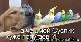Котоматрица: хуже попугаев ?! а чё...мой Суслик