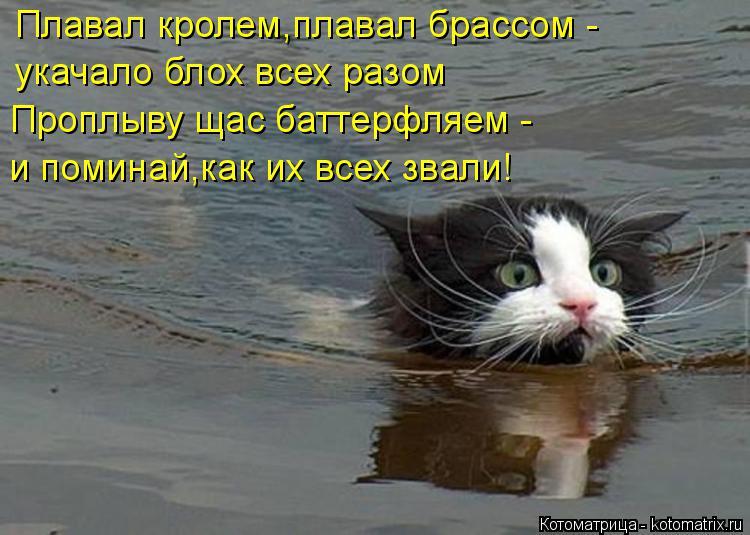 Котоматрица: Плавал кролем,плавал брассом - укачало блох всех разом Проплыву щас баттерфляем - и поминай,как их всех звали!
