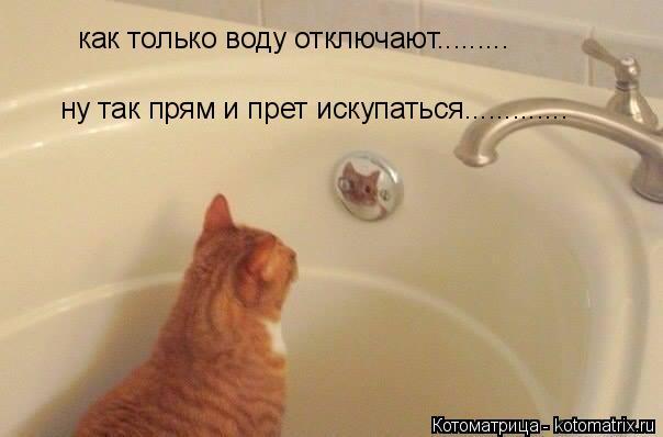 Котоматрица: как только воду отключают......... ну так прям и прет искупаться.............