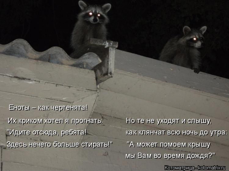 """Котоматрица: Еноты – как чертенята!  """"Идите отсюда, ребята!                   как клянчат всю ночь до утра:  Здесь нечего больше стирать!""""       """"А может помоем крышу"""