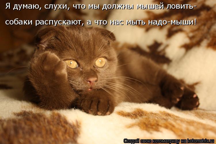 Котоматрица: Я думаю, слухи, что мы должны мышей ловить- собаки распускают, а что нас мыть надо-мыши!