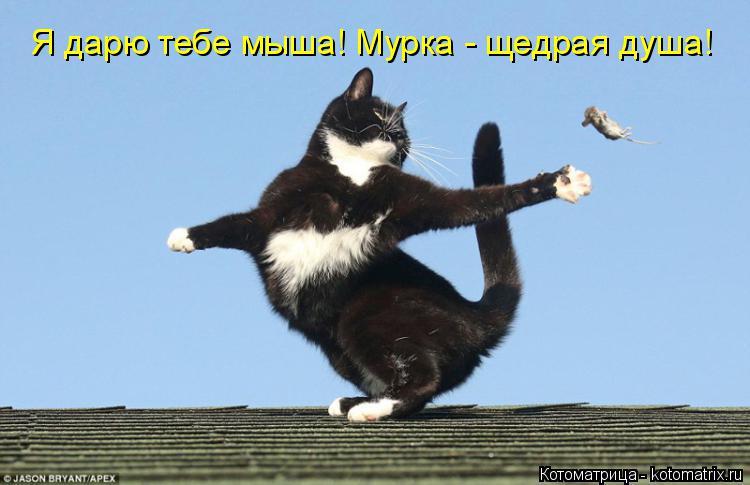 Котоматрица: Я дарю тебе мыша! Мурка - щедрая душа!
