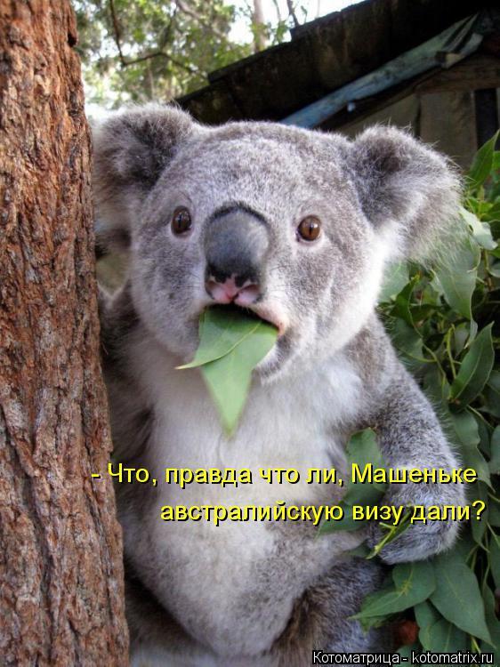 Котоматрица: - Что, правда что ли, Машеньке австралийскую визу дали?