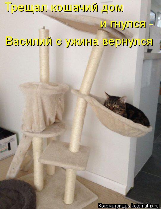 Котоматрица: Трещал кошачий дом и гнулся - Василий с ужина вернулся
