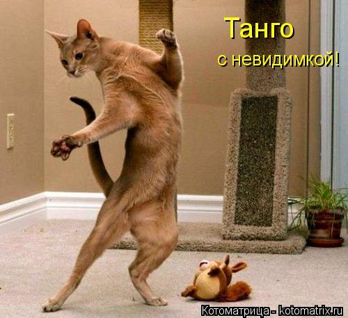 Котоматрица: Танго с невидимкой!