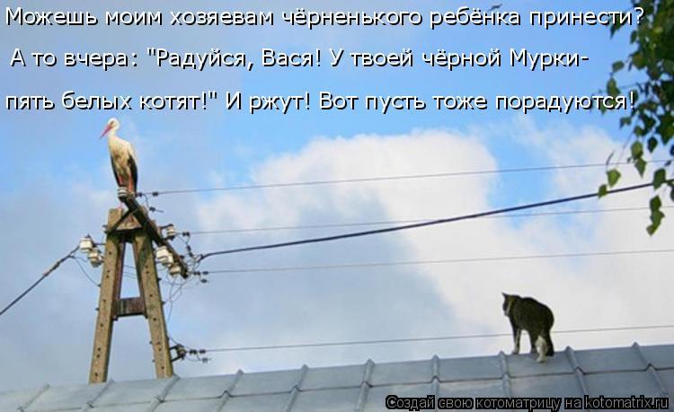 """Котоматрица: А то вчера: """"Радуйся, Вася! У твоей чёрной Мурки- пять белых котят!"""" И ржут! Вот пусть тоже порадуются!  Можешь моим хозяевам чёрненького ребён"""