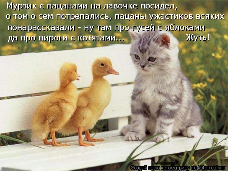 Котоматрица: Мурзик с пацанами на лавочке посидел, понарассказали - ну там про гусей с яблоками да про пироги с котятами... о том о сем потрепались, пацаны