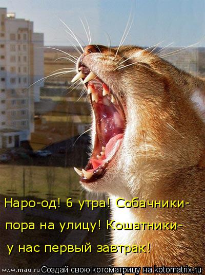 Котоматрица: Наро-од! 6 утра! Собачники- у нас первый завтрак! пора на улицу! Кошатники-