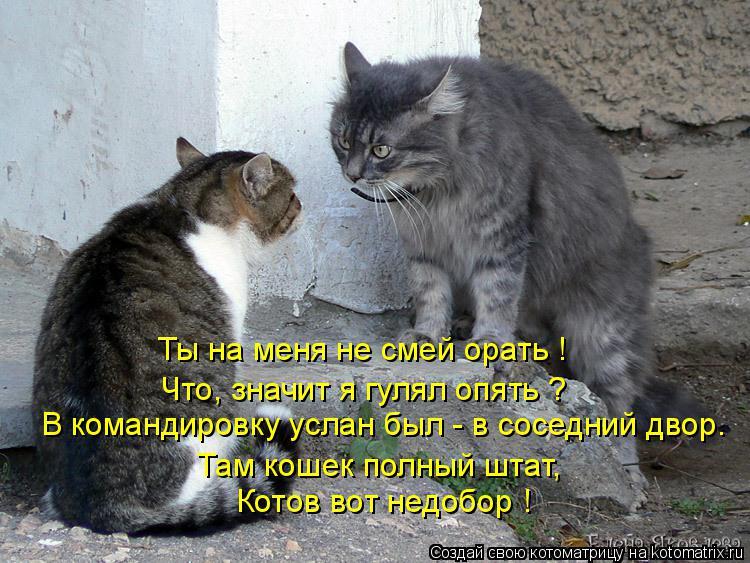 Котоматрица: Ты на меня не смей орать ! Что, значит я гулял опять ? В командировку услан был - в соседний двор. Там кошек полный штат, Котов вот недобор !