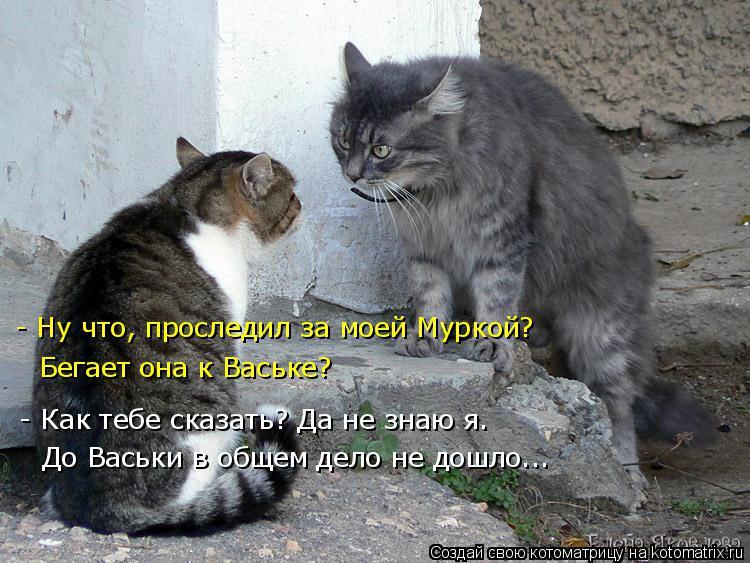 Котоматрица: - Ну что, проследил за моей Муркой? Бегает она к Ваське? - Как тебе сказать? Да не знаю я. До Васьки в общем дело не дошло...