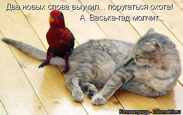Котоматрица: Два новых слова выучил... поругаться охота! А  Васька-гад молчит...