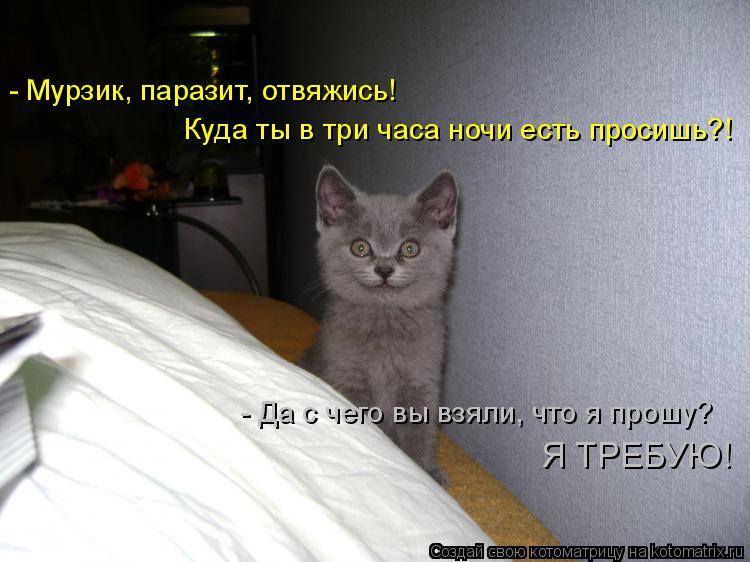 Котоматрица: - Мурзик, паразит, отвяжись! Куда ты в три часа ночи есть просишь?! - Да с чего вы взяли, что я прошу?  Я ТРЕБУЮ!