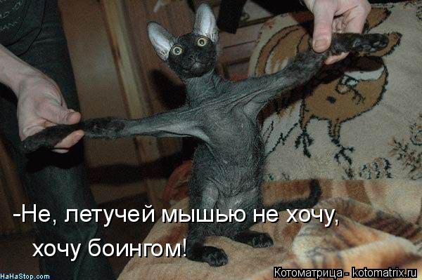 Котоматрица: -Не, летучей мышью не хочу, хочу боингом!