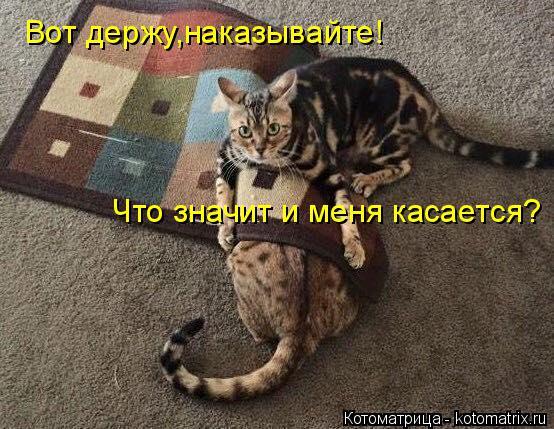 Котоматрица: Вот держу,наказывайте! Что значит и меня касается?