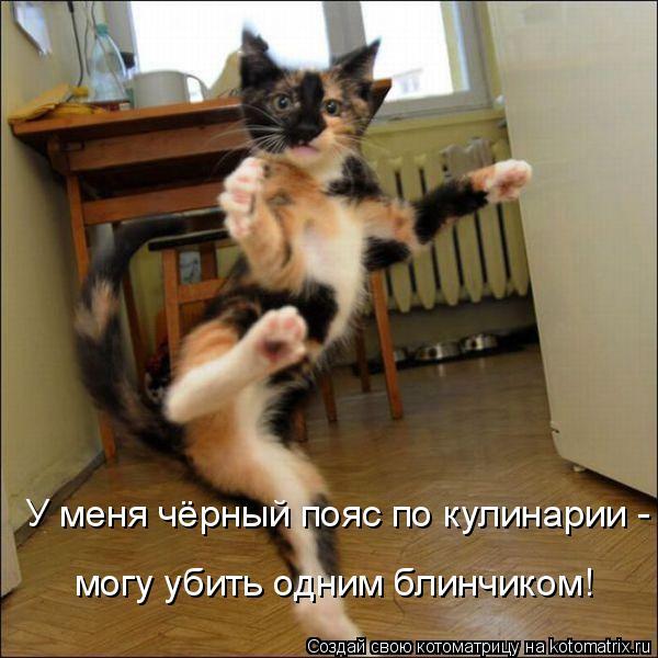 Котоматрица: У меня чёрный пояс по кулинарии - могу убить одним блинчиком! могу убить одним блинчиком!