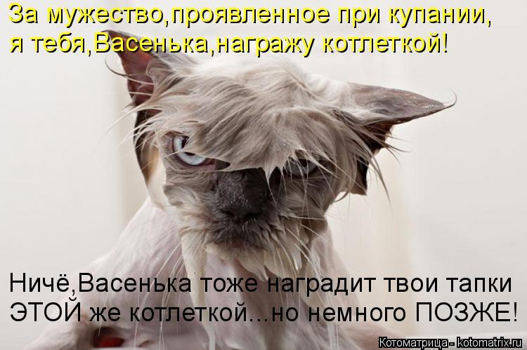 Котоматрица: За мужество,проявленное при купании, я тебя,Васенька,награжу котлеткой! Ничё,Васенька тоже наградит твои тапки ЭТОЙ же котлеткой...но немно