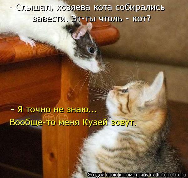Котоматрица: - Слышал, хозяева кота собирались  завести. Эт-ты чтоль - кот? - Я точно не знаю...  Вообще-то меня Кузей зовут.