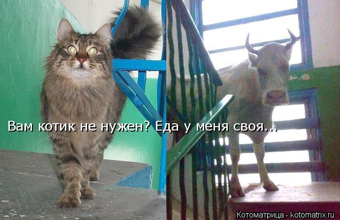 Котоматрица: Вам котик не нужен? Еда у меня своя...