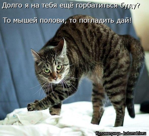 Котоматрица: То мышей полови, то погладить дай! Долго я на тебя ещё горбатиться буду?