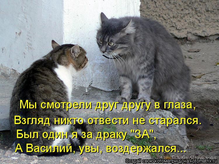 """Котоматрица: Мы смотрели друг другу в глаза, Взгляд никто отвести не старался. Был один я за драку """"ЗА"""", А Василий, увы, воздержался..."""