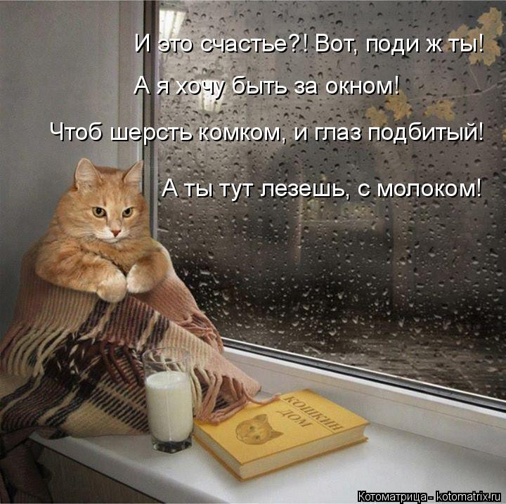 Котоматрица: И это счастье?! Вот, поди ж ты! А я хочу быть за окном! Чтоб шерсть комком, и глаз подбитый! А ты тут лезешь, с молоком!
