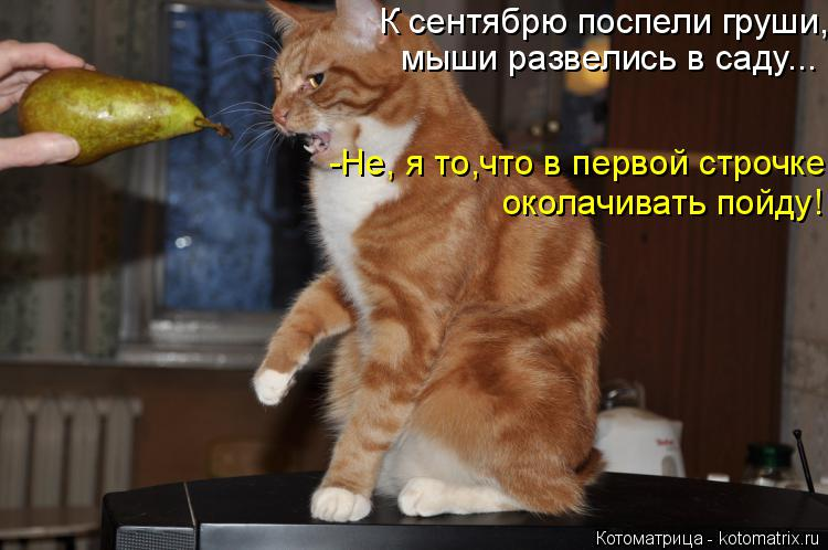 Котоматрица: К сентябрю поспели груши, -Не, я то,что в первой строчке околачивать пойду! мыши развелись в саду...