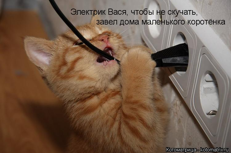 Котоматрица: Электрик Вася, чтобы не скучать, завел дома маленького коротёнка